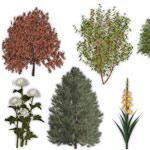 3Д модели растений в ландшафтной программе Наш Сад