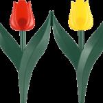 текстура оградка для растений Тюльпан