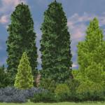 3D вид композиции с можжевельниками и туями