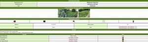 таблица с информацией о растении
