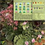 фильтр комнатных растений программы Наш Сад