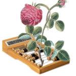 коллаж: растение и счеты