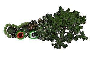 схема цветника в наш Сад