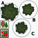 обозначение растений на плане