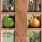 изображения частей растения